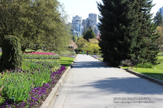 Stanley Park Rose Garden, Vancouver BC