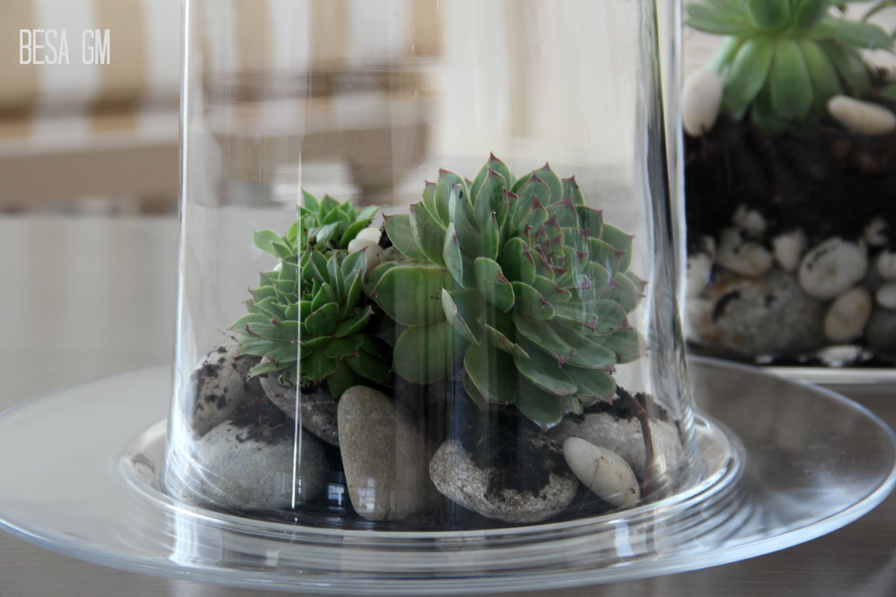 Diy succulent centerpiece besa gm