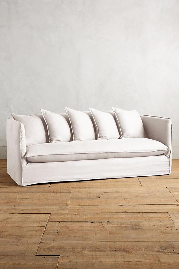 white-antro